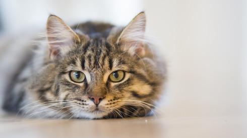 cat-1686730_960_720