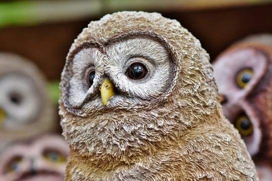 owl-3861498_1920